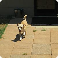 Adopt A Pet :: Laurie - Gadsden, AL