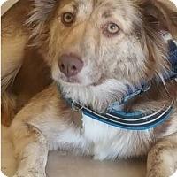 Adopt A Pet :: Estrella - Hillside, IL