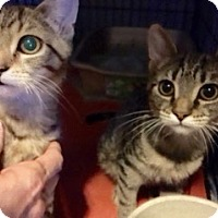 Adopt A Pet :: Rox and Tilly - Colmar, PA