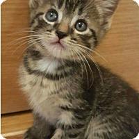 Adopt A Pet :: Zebby - Evans, WV