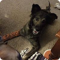 Adopt A Pet :: Nealon - Lexington, NC