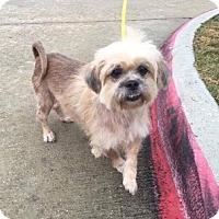 Adopt A Pet :: Lady Camo in RI - Providence, RI