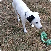Adopt A Pet :: Melo - Palm Bay, FL