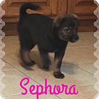 Adopt A Pet :: Sephora - Fort Wayne, IN