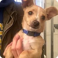 Adopt A Pet :: Baker (V) - Santa Ana, CA