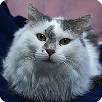 Adopt A Pet :: Gwendolyn - Maple Ridge, BC