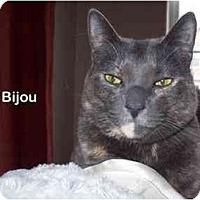 Adopt A Pet :: Bijou - Portland, OR