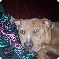 Adopt A Pet :: CHUCKLES - Dayton, OH