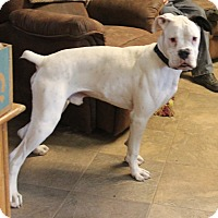 Adopt A Pet :: Ghost Buster - Dayton, OH