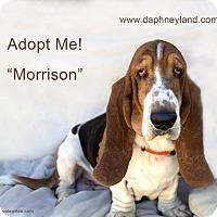 Adopt A Pet :: Morrison - Acton, CA