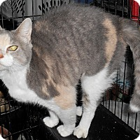 Adopt A Pet :: Desiree - Chattanooga, TN