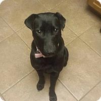 Adopt A Pet :: Nadia - Surprise, AZ