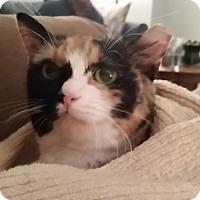 Adopt A Pet :: Ladybug - Alexandria, VA
