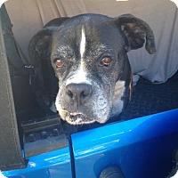 Adopt A Pet :: Jack - Oakhurst, NJ