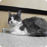 Adopt A Pet :: Phyllis - Riverside, CA