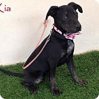 Adopt A Pet :: Kia - San Diego, CA