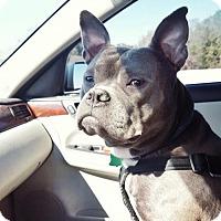 Adopt A Pet :: Jeremy - Houston, TX