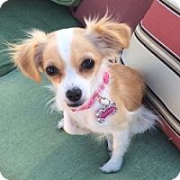 Adopt A Pet :: Kaylee Sugar - Mesa, AZ