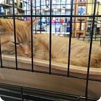 Adopt A Pet :: Harris - Manchester, CT