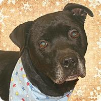 Adopt A Pet :: Sammie - Cincinnati, OH