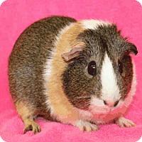 Adopt A Pet :: *Urgent* Faith - Fullerton, CA