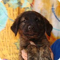 Adopt A Pet :: Memphis - Oviedo, FL