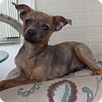 Adopt A Pet :: Mikey - Homestead, FL