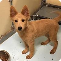 Adopt A Pet :: Taffy - Aurora, CO