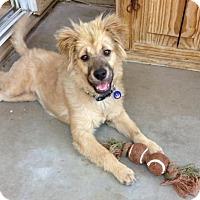 Adopt A Pet :: Wuzzle - Glendale, AZ