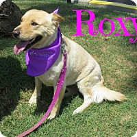 Adopt A Pet :: Roxy - Scottsdale, AZ