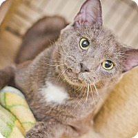 Adopt A Pet :: Jeff - East McKeesport, PA