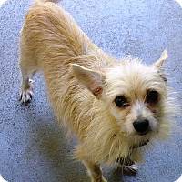 Terrier (Unknown Type, Small) Mix Dog for adoption in Kalamazoo, Michigan - Juniper