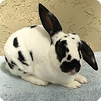 Adopt A Pet :: Arnie - Bonita, CA