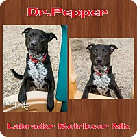 Adopt A Pet :: Dr. Pepper - Harrisburg, NC