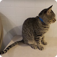 Adopt A Pet :: Hawthorne - Geneseo, IL