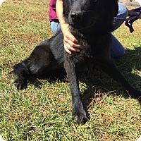 Adopt A Pet :: Renae - Sagaponack, NY