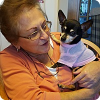Adopt A Pet :: Abbie - Grand Rapids, MI