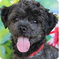 Adopt A Pet :: LEVI - Red Bluff, CA