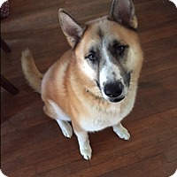 Adopt A Pet :: Eskimo - Courtesy Listing - Gig Harbor, WA
