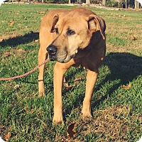 Adopt A Pet :: Moby - Newport, KY