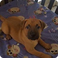 Adopt A Pet :: Cooper - Mansfield, TX