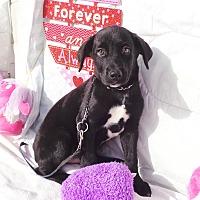 Adopt A Pet :: Walker - West Chicago, IL