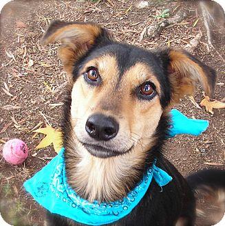 German Shepherd Dog/Husky Mix Dog for adoption in El Cajon, California - Rocky