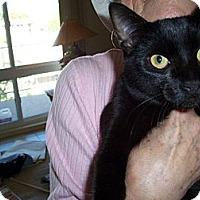 Adopt A Pet :: Pistachio - Laguna Woods, CA