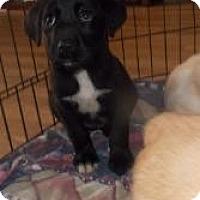 Adopt A Pet :: Bama (Puppy 7) - Rome, NY