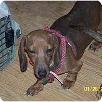 Adopt A Pet :: Lexus - Andrews, TX