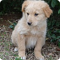 Adopt A Pet :: *Gracie - PENDING - Westport, CT