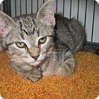 Adopt A Pet :: Marti - Shelton, WA