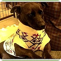 Adopt A Pet :: Thelma - Hartsville, TN