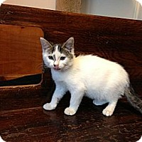 Adopt A Pet :: Quincy - Lancaster, MA